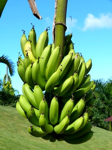 Fruits tropicaux a portee de main 1