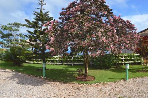 Jardin arbore