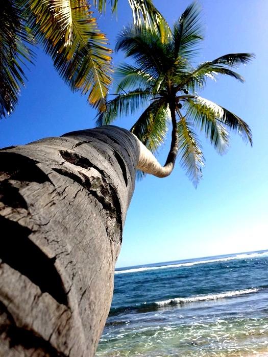 Vivre quelques mois sous les cocotiers